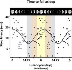 Kuvassa on eri värisin pystypalkein osoitettu kuun kierron mukaiset kolme ryhmää, joita vastaava kuun kierron vaihe on osoitetttu ylhäällä vaakapalkissa. Pisteet tarkoittavat yksittäisen koehenkilän nukahtamisnopeutta (asteikko vasemmalla). Käyrä kertoo matemaattisen riippuvuuden havaintopisteiden ja ajan (kuuun kierron) välillä.